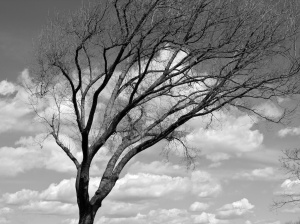 Branches and Clouds